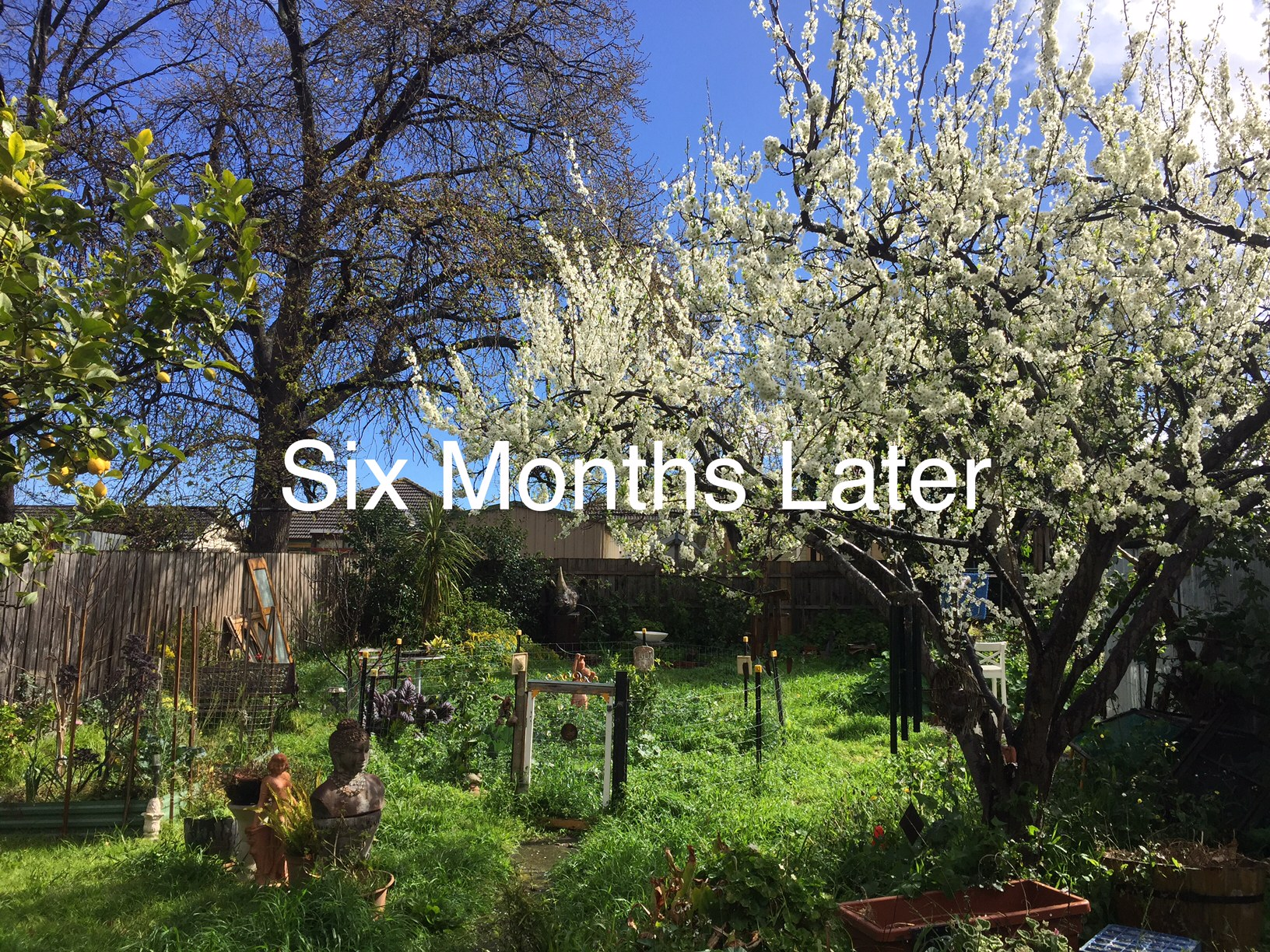 six_months_later_2